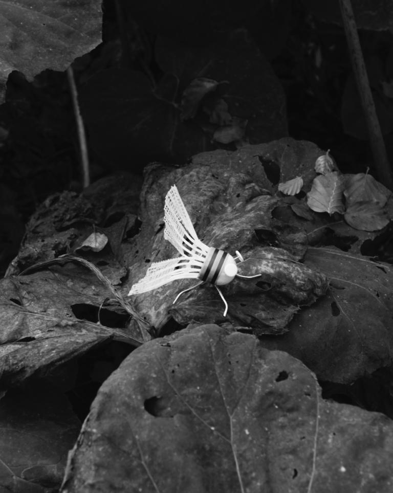 Fly, 2019