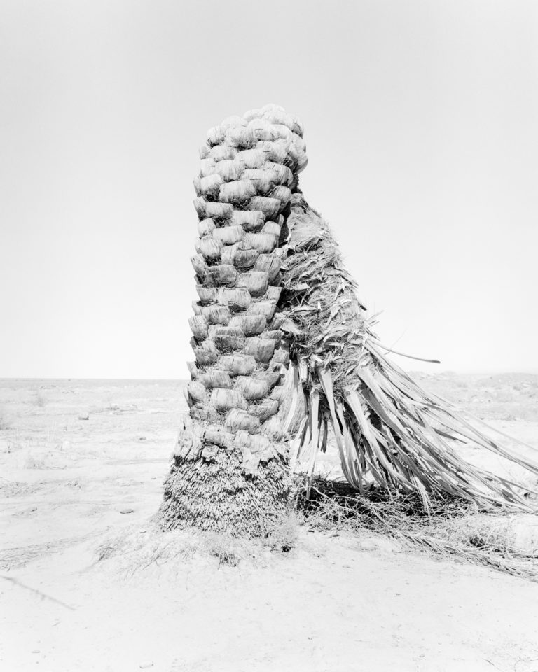 Palm 07, Conference of the Birds, 2019 100cm x 80cm Archival Pigment Print Hahnemuehle Photo Rag Sybren Vanoverberghe - Courtesy of the artist and Stieglitz19