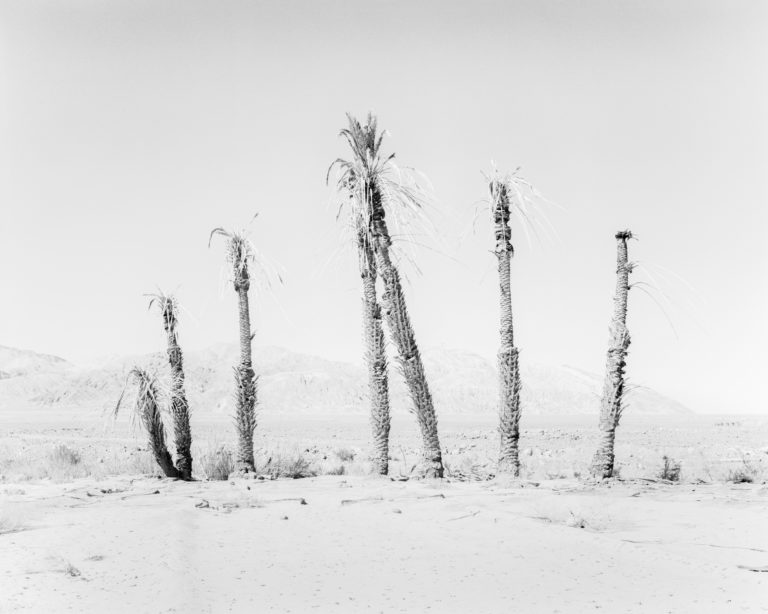 Village View 07, Conference of the Birds, 2019 140 cm x 110 cm Archival Pigment Print Hahnemuehle Photo Rag Sybren Vanoverberghe - Courtesy of the artist and Stieglitz19